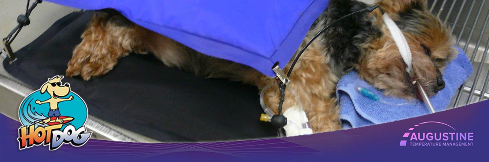 Hot Dog Patient Warming System Veterinary